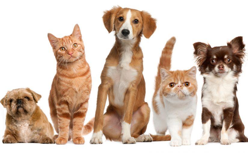 Gyvūnų prekių parduotuvė Vilniuje laukia jūsų!